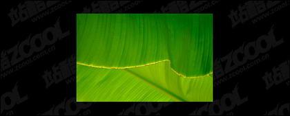 葉品質画像素材-2