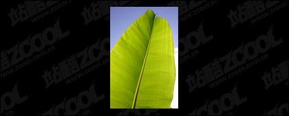 葉品質画像素材-4