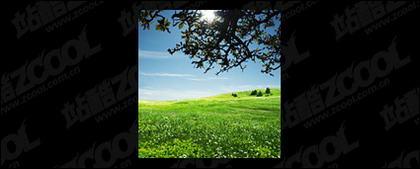 草空写真素材