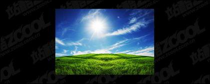 หญ้าฟ้ารูปภาพวัสดุ-3