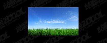 หญ้าฟ้ารูปภาพวัสดุ-4