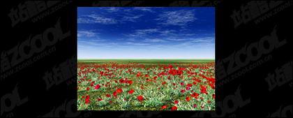 赤花写真素材の草地