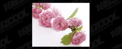 ピンクの花の画像品質素材-2