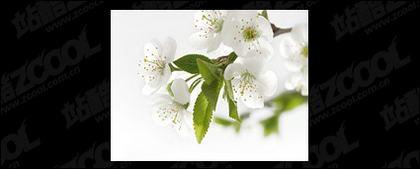 Material de calidad de imagen de flores blancas
