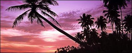 夕暮れの海辺ココナッツ映像素材