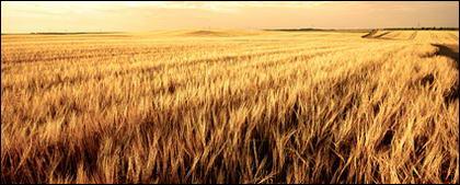 Material de imagem de época de colheita