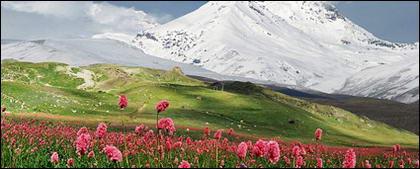 雪をかぶった山の花写真素材