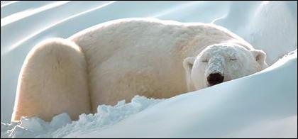 ไอการเรนเดอร์ที่เหมือนจริงของวัสดุเวกเตอร์หมีขั้วโลก