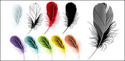 เวกเตอร์วัสดุอย่างสี feathers