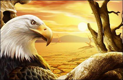 el águila en Sunset