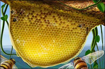 Пчелы, сотовой, ротанг завод