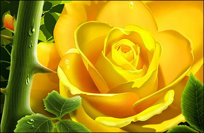Las rosas amarillas con agua
