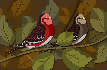 Psd birdies ในสาขาวัสดุชั้น