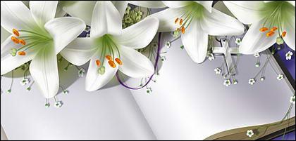 Libros y lily