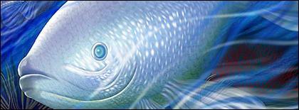 Psd de poissons d'eau profonde MATERIAU STRATIFIE