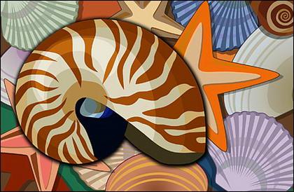 Моллюсков, снаряды, морская звезда слоистой ОСЧС материал