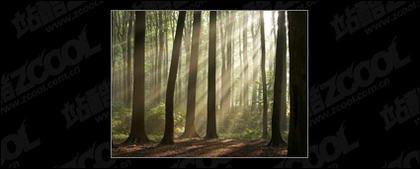 品質の素材の森の中を画像します。