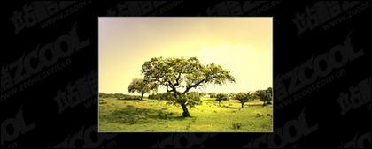 Material de imagen de árbol