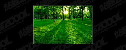 Bäume und Rasen in der Abenddämmerung