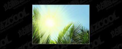 太陽の写真素材