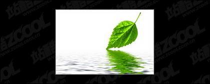 La reflexión de hojas y material de imagen