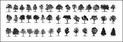 องค์ประกอบของต้นไม้ในรูปภาพ
