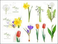 Некоторые цветы вектор