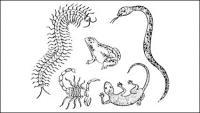 Gecko многоножки скорпионы и змей жаба векторного материала