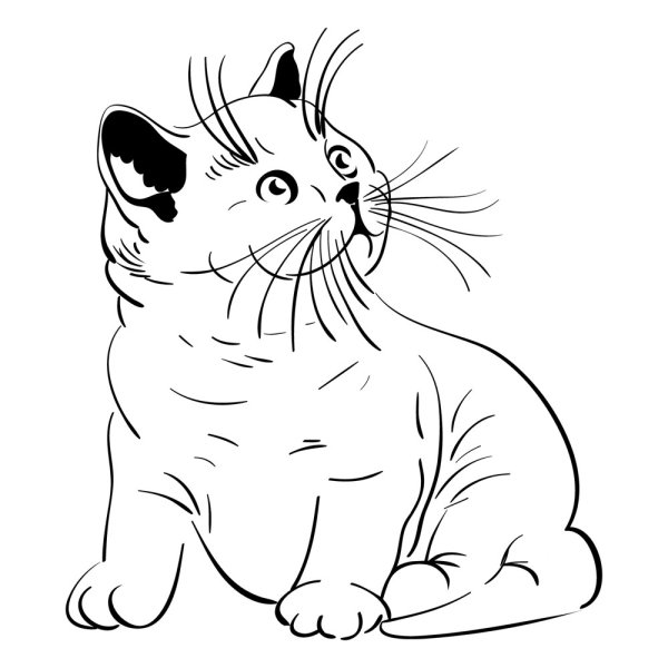 Line Drawing Animal Face : Keywords cat vector material cute line art animal