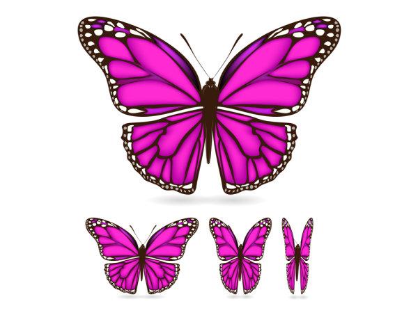 아름 다운 나비 소재 02-벡터 자료